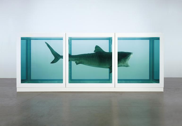 Hirst - shark